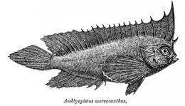 Image of Spiny leaffish