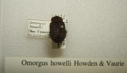 Image of <i>Trox howelli</i>