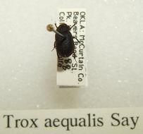 Image of <i>Trox</i> (<i>Niditrox</i>) <i>aequalis</i> Say 1831