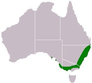 "<span class=""translation_missing"" title=""translation missing: en.medium.untitled.map_image_of, page_name: Sydney golden wattle"">Map Image Of</span>"