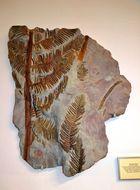 Image of treefern