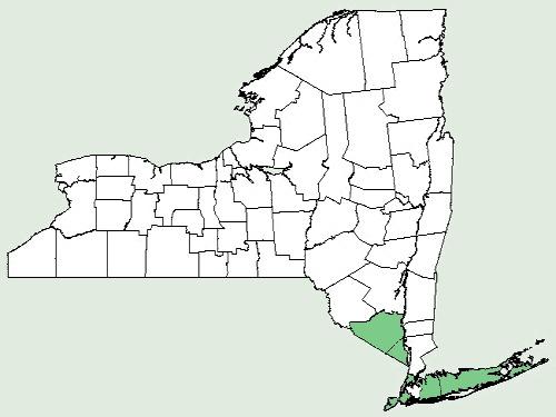 Map of false daisy