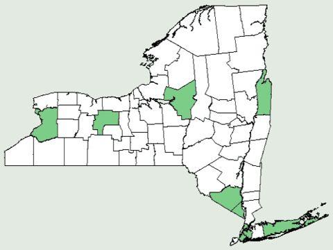 Map of creeping woodsorrel