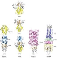 Image of <i>Burkholderia pseudomallei</i>
