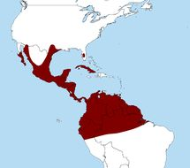 "<span class=""translation_missing"" title=""translation missing: en.medium.untitled.map_image_of, page_name: Caracara Merrem 1826"">Map Image Of</span>"