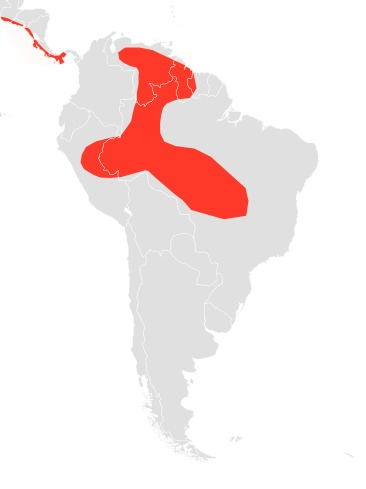 Map of free-tailed bats