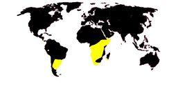Map of birthwort family
