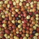 Image of bambarra groundnut