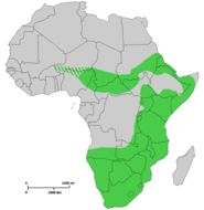 Map of Black Rhinoceros