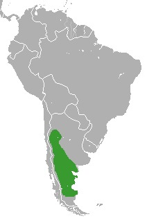 Map of guinea pigs