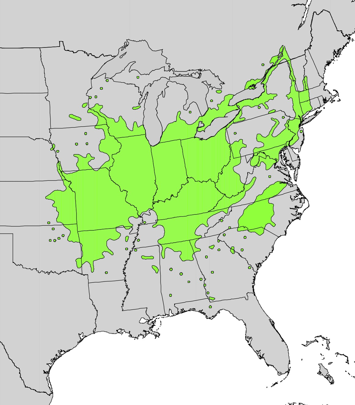 "<span class=""translation_missing"" title=""translation missing: en.medium.untitled.map_image_of, page_name: American bladdernut"">Map Image Of</span>"