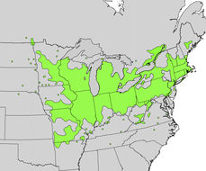 Map of Gray Dogwood