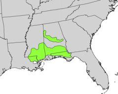 "<span class=""translation_missing"" title=""translation missing: en.medium.untitled.map_image_of, page_name: Florida anisetree"">Map Image Of</span>"