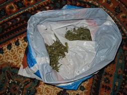 Image of marijuana