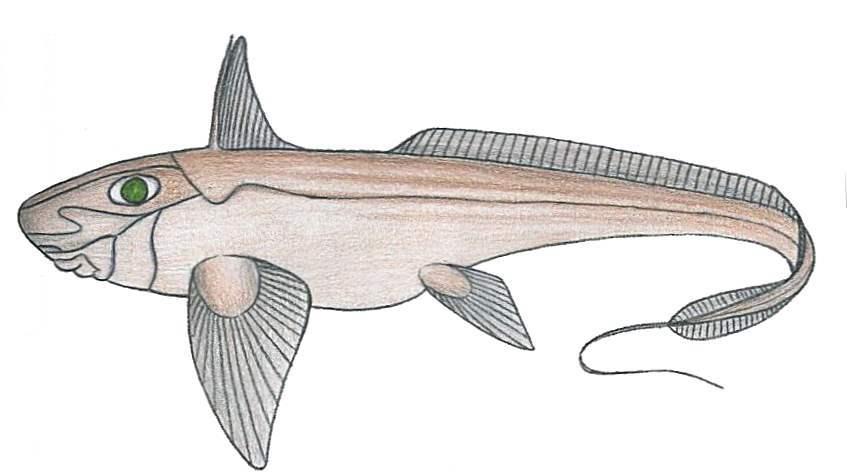 Image of Pale Chimaera