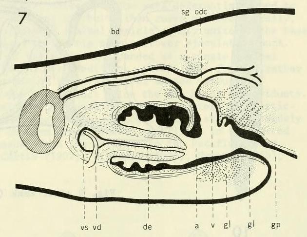 Image of Cura