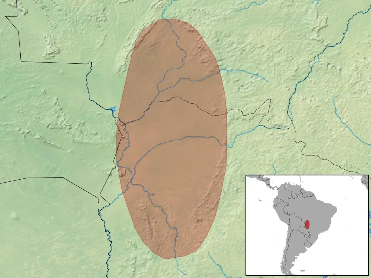 Image of Paraguayan Punaré