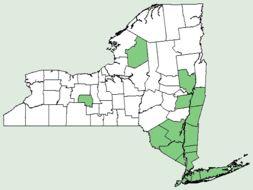 Map of swamp azalea