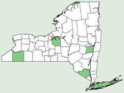 Map of <i>Diodella teres</i> (Walter) Small