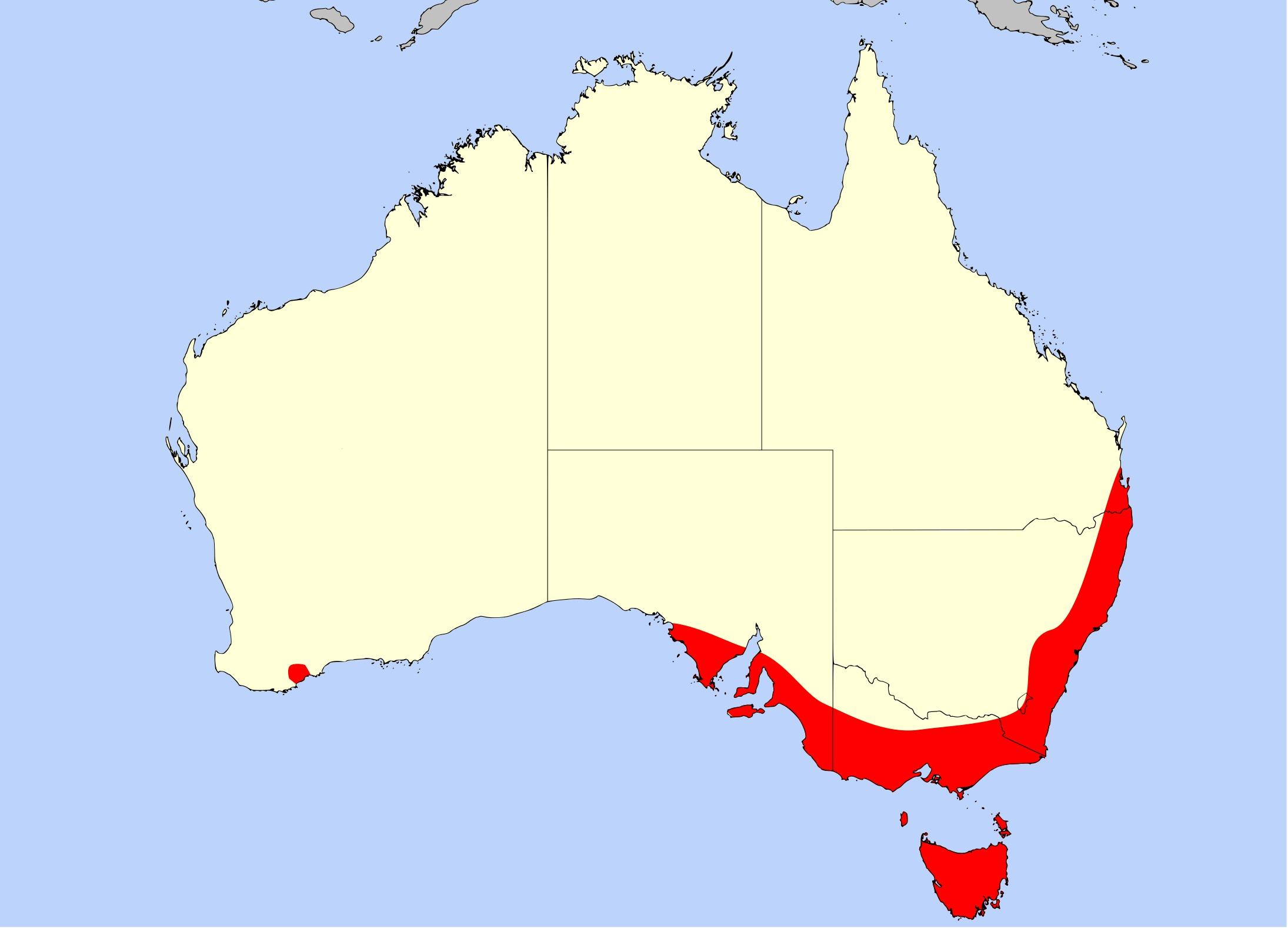 Map of <i>Drosera pygmaea</i> DC.