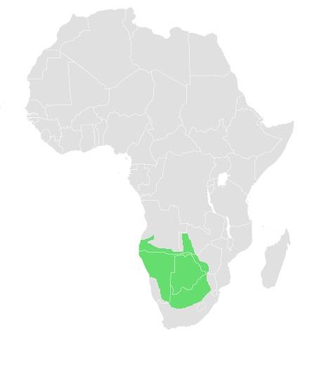 Map of Prinia Horsfield 1821