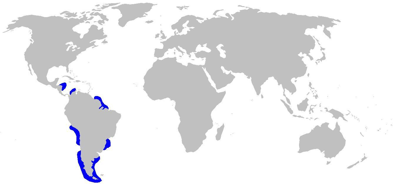 Map of cat sharks