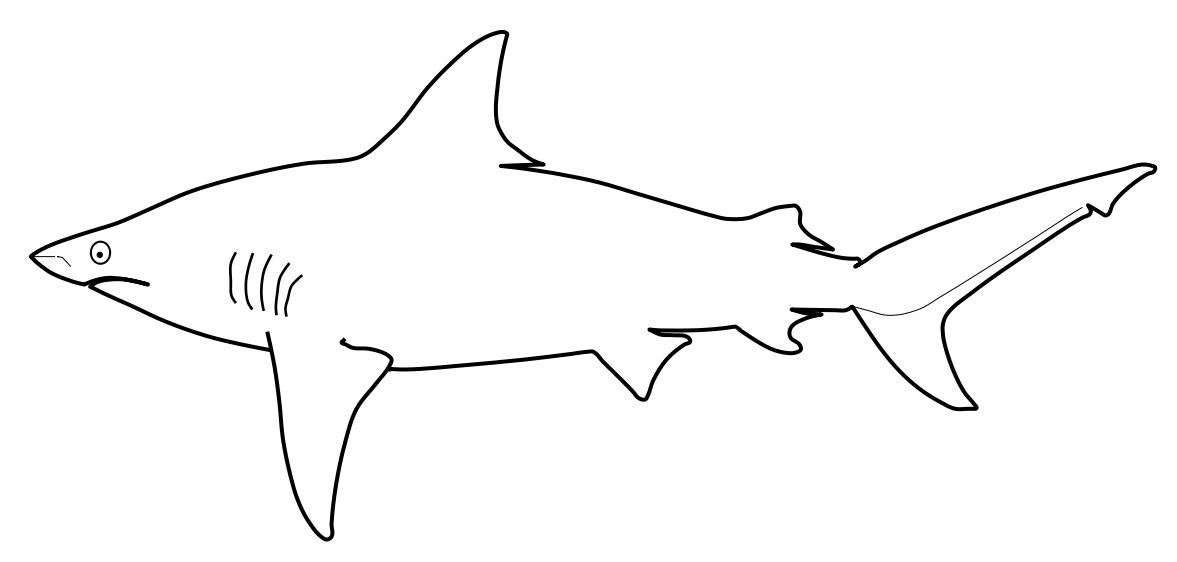Image of Graceful Shark