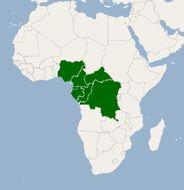 Image of African mango