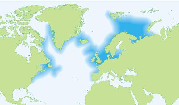 """<span class=""""translation_missing"""" title=""""translation missing: en.medium.untitled.map_image_of, page_name: &lt;i&gt;Gadus morhua&lt;/i&gt; Linnaeus 1758"""">Map Image Of</span>"""