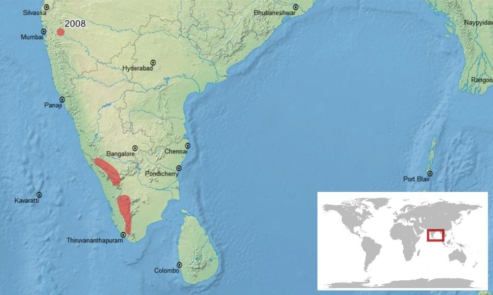 """<span class=""""translation_missing"""" title=""""translation missing: en.medium.untitled.map_image_of, page_name: &lt;i&gt;Duttaphrynus parietalis&lt;/i&gt; (Boulenger 1882)"""">Map Image Of</span>"""