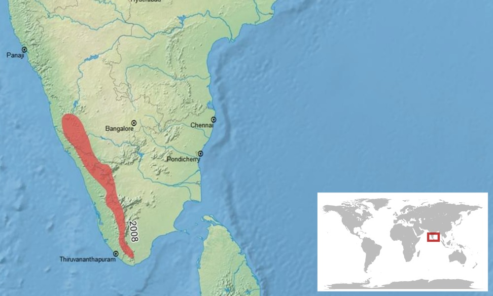 """<span class=""""translation_missing"""" title=""""translation missing: en.medium.untitled.map_image_of, page_name: Brown Tropical Frog"""">Map Image Of</span>"""
