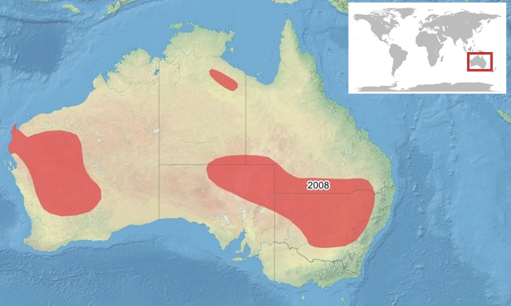 Map of <i>Litoria platycephala</i>