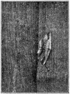 Image of Waved Umber