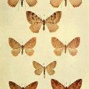 Image of Hydria Hubner 1822