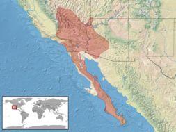 "<span class=""translation_missing"" title=""translation missing: en.medium.untitled.map_image_of, page_name: Speckled Rattlesnake"">Map Image Of</span>"