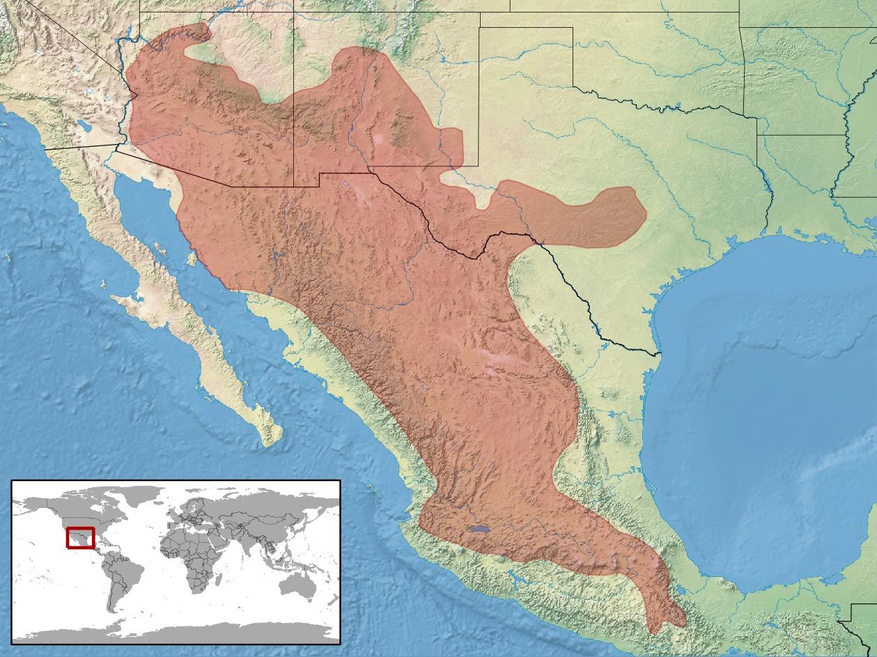 "<span class=""translation_missing"" title=""translation missing: en.medium.untitled.map_image_of, page_name: Blacktail Rattlesnake"">Map Image Of</span>"
