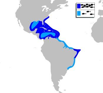 Map of Blackbarred Squirrelfish