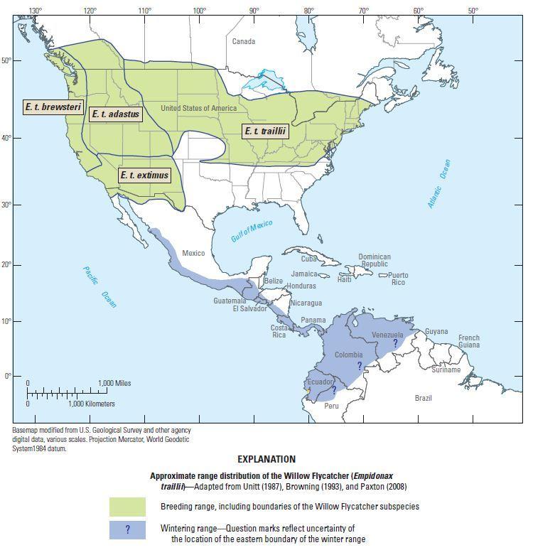 "<span class=""translation_missing"" title=""translation missing: en.medium.untitled.map_image_of, page_name: Empidonax Cabanis 1855"">Map Image Of</span>"