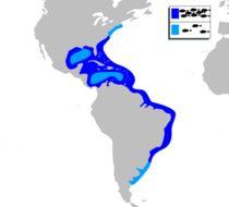 Map of Big-eye Soldierfish