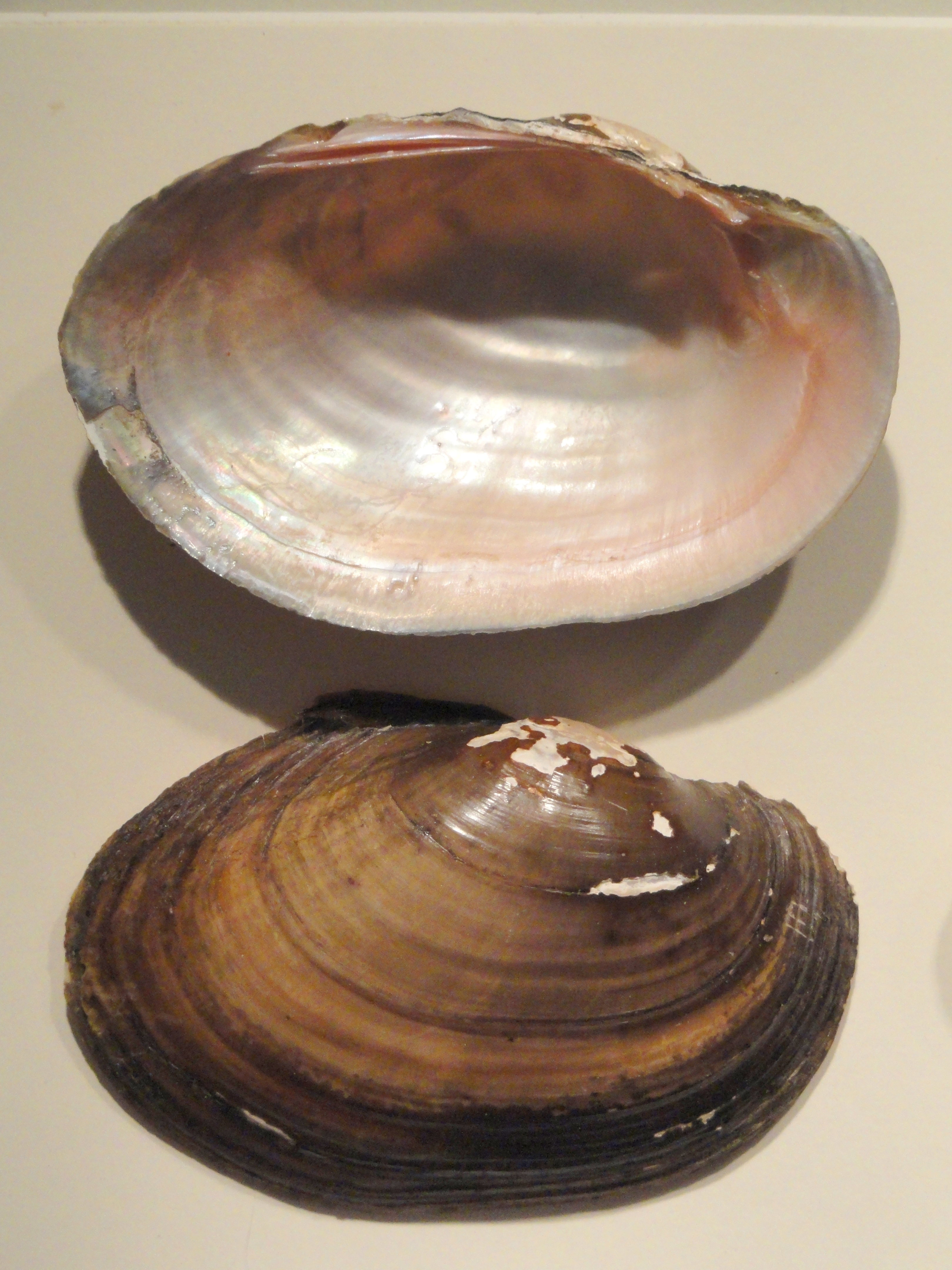 Image of Tidewater Mucket