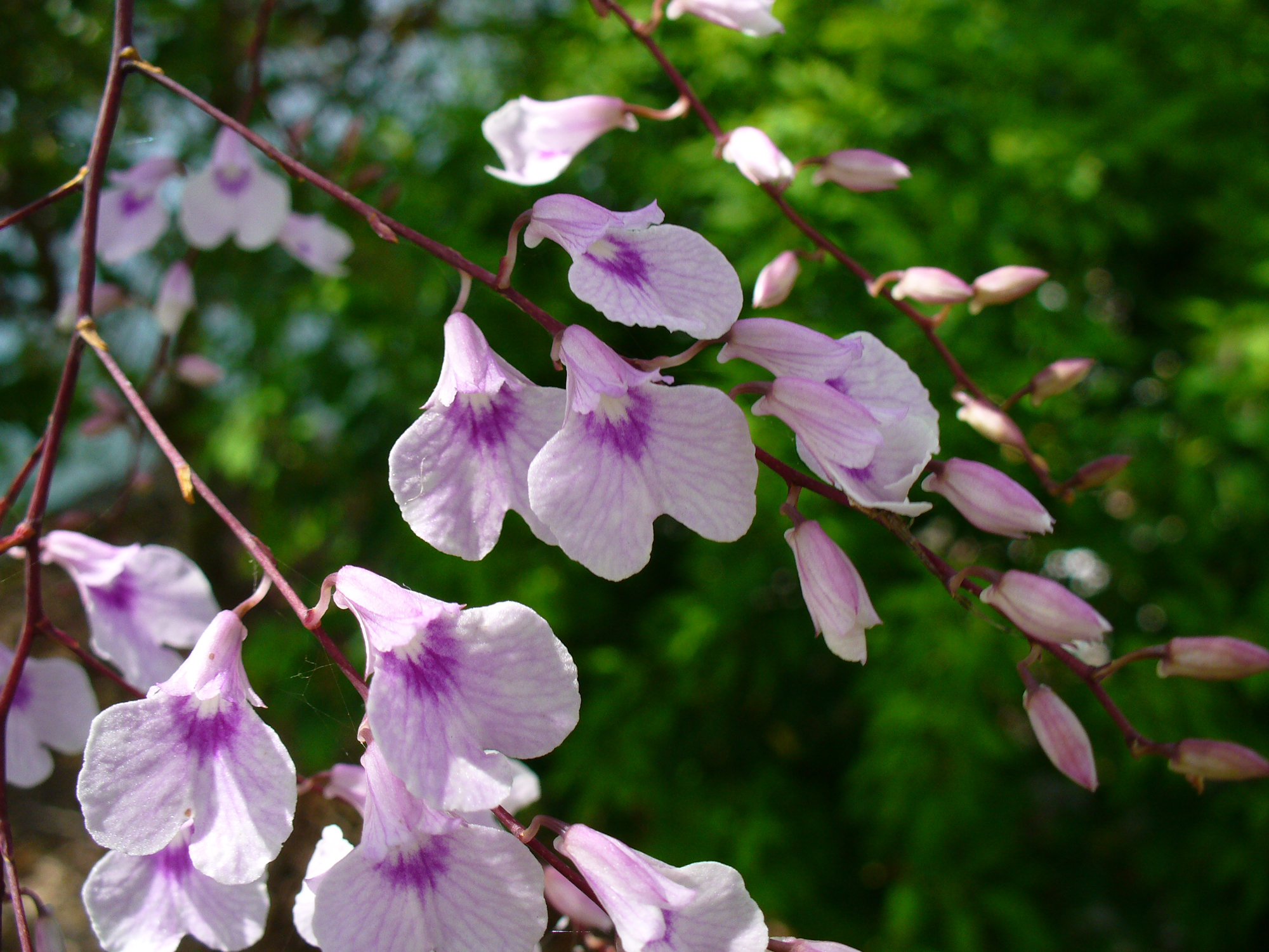 Image of delicate violet orchid