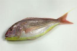Image of Japanese threadfin-bream