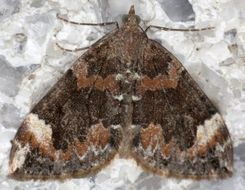Image of Dark Marbled Carpet