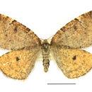 Image of Epirranthis