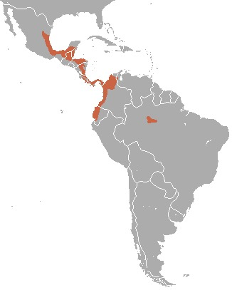 Map of Red-lored Parrot