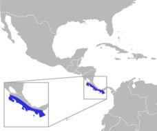 "<span class=""translation_missing"" title=""translation missing: en.medium.untitled.map_image_of, page_name: Orange-collared Manakin"">Map Image Of</span>"