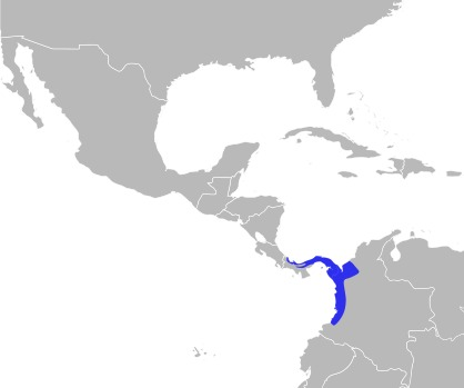 "<span class=""translation_missing"" title=""translation missing: en.medium.untitled.map_image_of, page_name: Manacus Brisson 1760"">Map Image Of</span>"