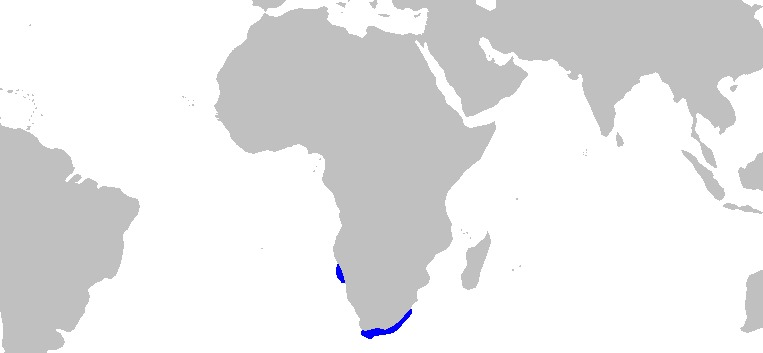 """<span class=""""translation_missing"""" title=""""translation missing: en.medium.untitled.map_image_of, page_name: Cape Numbfish"""">Map Image Of</span>"""