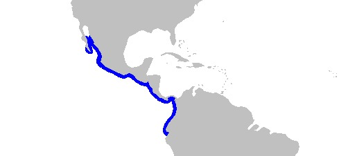 Map of painted electric rays