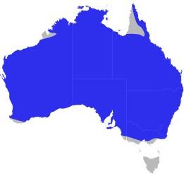 Map of Pygopodidae